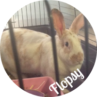 Flopsy the bunny