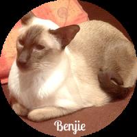 Benjie the Cat