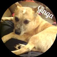 image_ginga_circle