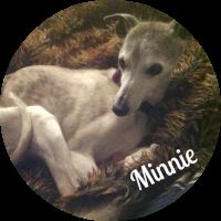 image_minnie_circle